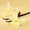 Состав аромата Coco Mademoiselle